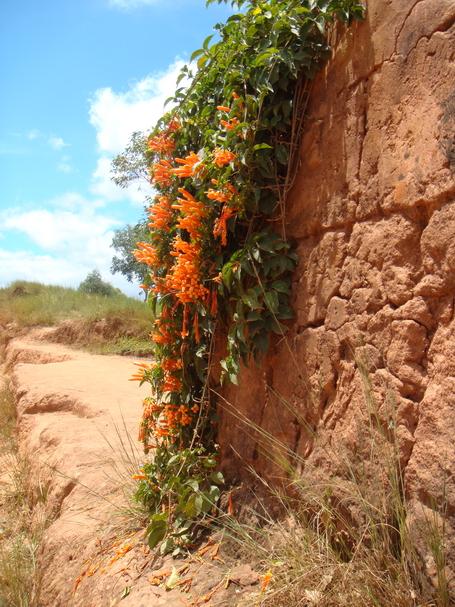 fleur gravolia