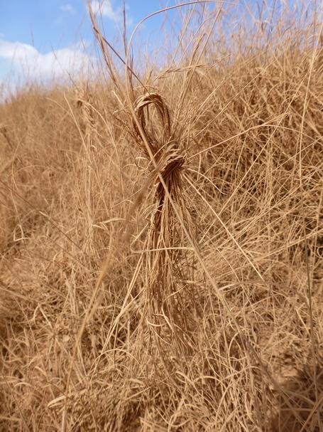 aux abords du tombeau le long de la piste il y a une multitude de noeux fait avec les brins d' herbe.  La culture populaire veut que cela vous permette d' entreprendre un bon voyage