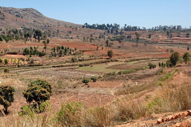 rizières du village de AMBODIRANO