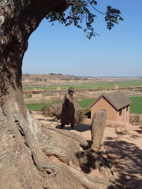 Pierre levée et l'arbre centenaire voandelaka du village Antanjondroa