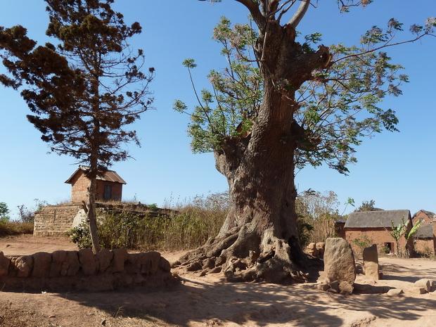 village de Antanjondroa tombeaux d' Andrianarakotobe arbre centenaire voandelaka