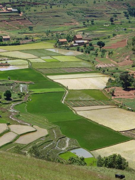 rizière Antanety