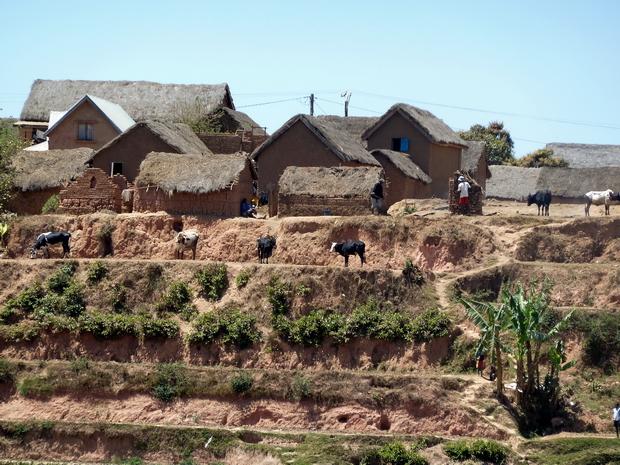 rizière plateau Ambohimiadana