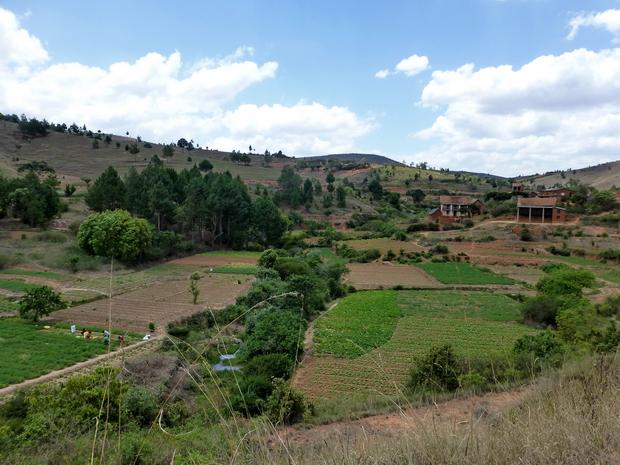 rizières Miadamanjaka