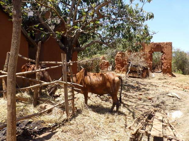 village Ankadivoribe parc à zébus