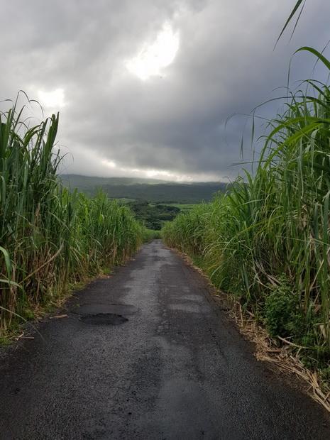 route forêt Mare-Longue