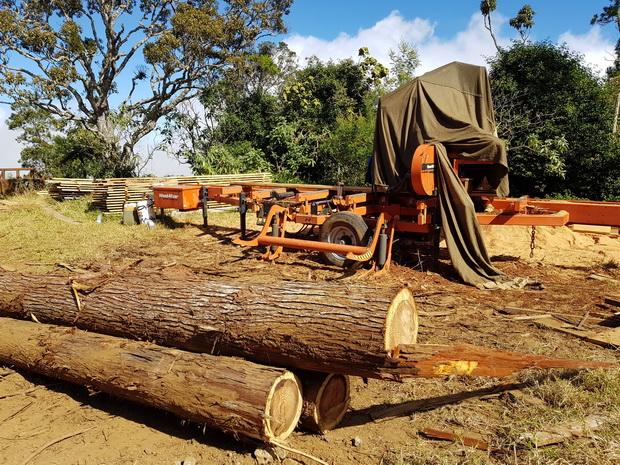scierie : travail du bois sur place