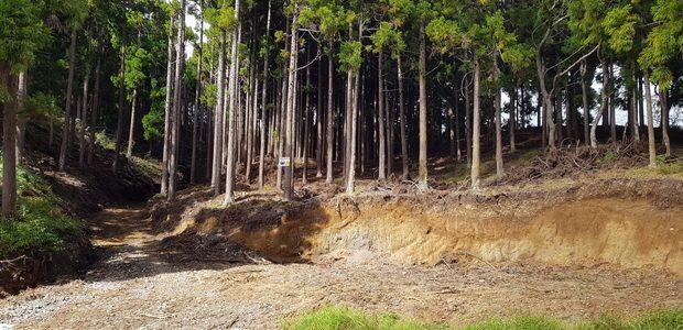 ROUTE FORESTIERE DU BOIS DE NEFLES