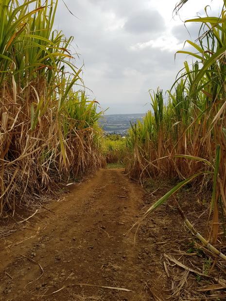 Hauts de la Plaine chemin Gonneau